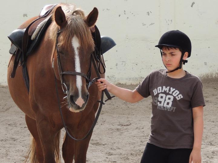 Jamaique Centre equestre