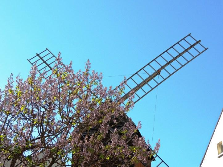Montmartre le moulin de la Galette.