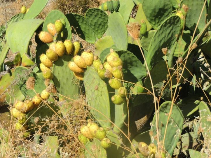Andalousie cactus