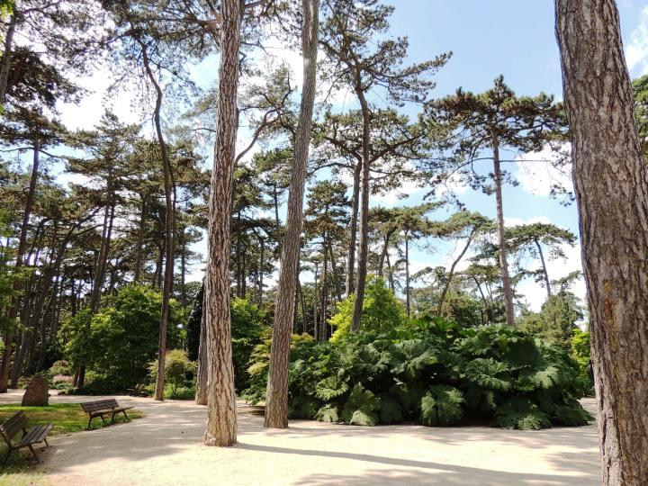 Parc Floral juin 2015 (44)