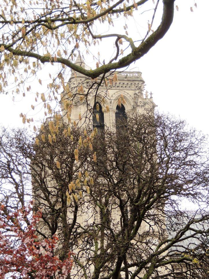 Square René Viviani vue sur notre Dame de Paris
